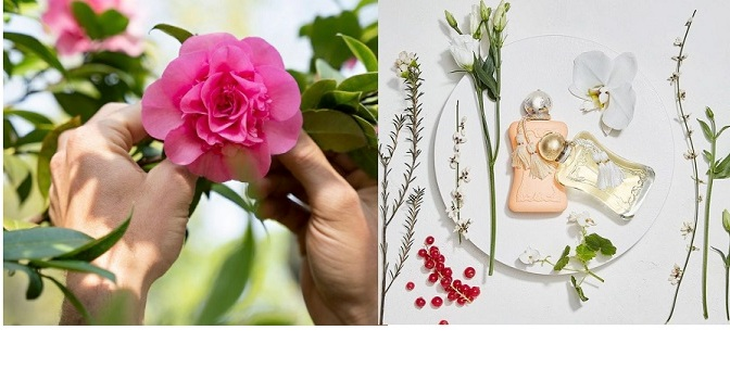 The art of synesthesia when choosing a fragrance